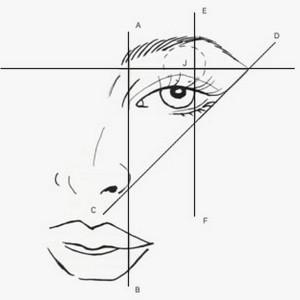 cómo hacer cejas con líneas guía